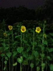 photo-1.jpg